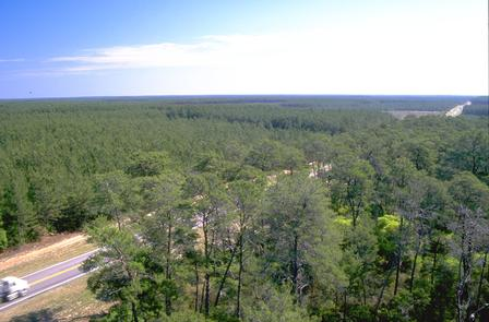 The Florida Black Bear Scenic Byway in the Ocala National Forest