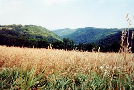 Farmland with Bluffs in Background