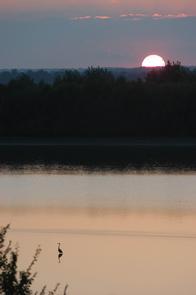 Lone Heron At Sunset