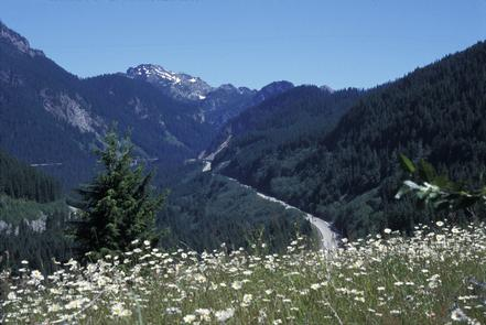 Scenic White Flowers Above I-90
