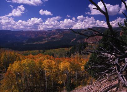Fall at Cedar Breaks