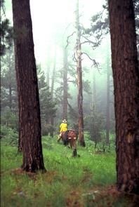 Gila Wilderness: The Last Solitude