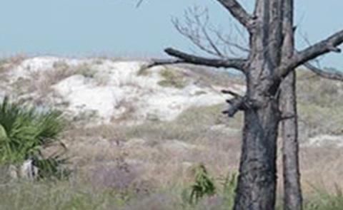 Apalachicola National Estuarine Research Reserve, Florida