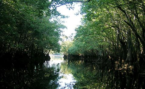 Owl Creek in Apalachicola National Estuarine Research Reserve, Florida