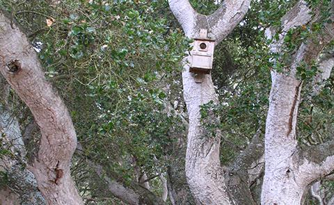 California Live Oak Trees in Elkhorn Slough National Estuarine Research Reserve, California