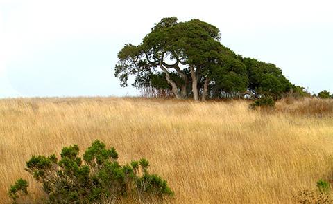 Grasslands in Elkhorn Slough National Estuarine Research Reserve, California