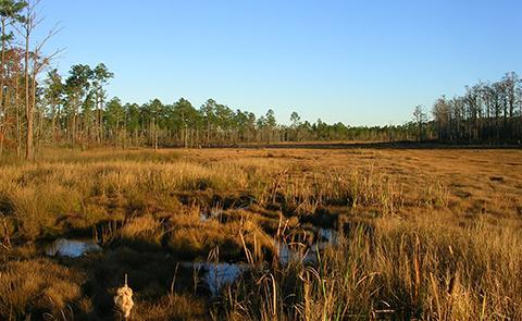 Hawks' Marsh at sunset at Grand Bay National Estuarine Research Reserve, Mississippi