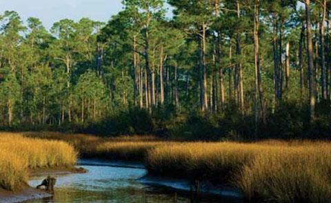 A view of marsh land at Grand Bay National Estuarine Research Reserve, Mississippi