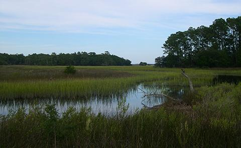 Marsh within the North Inlet-Winyah National Estuarine Research Reserve, South Carolina
