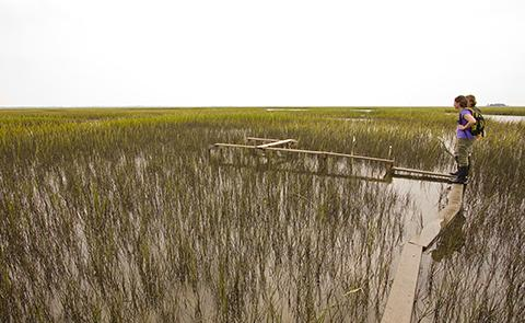 Conducting a transect within the North Inlet-Winyah National Estuarine Research Reserve, South Carolina