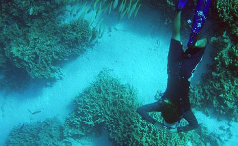 Snorkeling at Kure Atoll