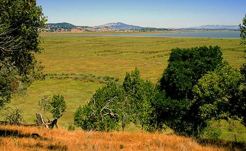 View of San Francisco Bay from the San Francisco National Estuarine Research Reserve, California