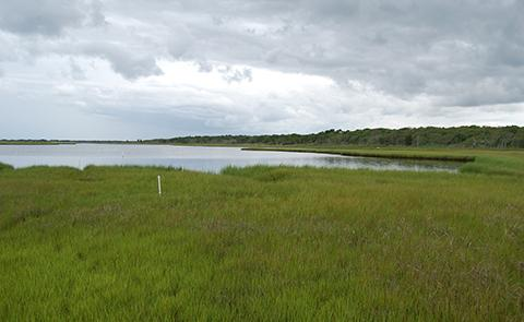 View of marsh at Waquoit Bay National Estuarine Research Reserve