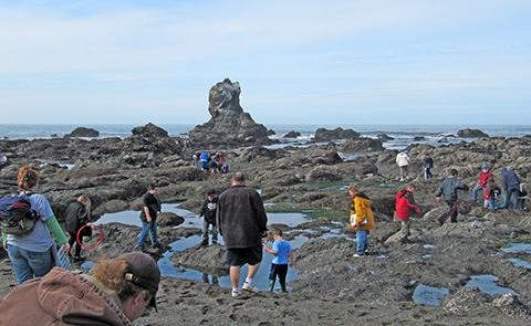 TidepoolingTidepooling at rocky intertidal beach