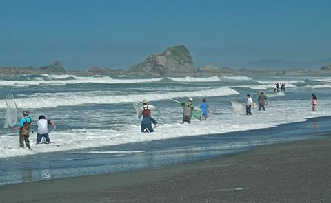 Smelt fishingSmelt fishing in Olympic Coast National Marine Sanctuary