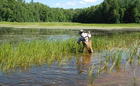 Monitoring in Little Pokegama Bay in Lake Superior National Estuarine Research Reserve, Wisconsin