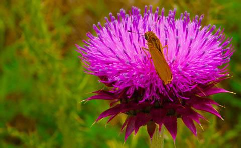 pink flower with butterflybutterfly on flower