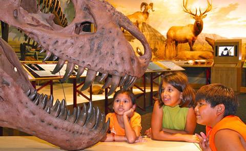 kids looking at a dinosaur skull