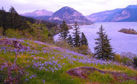 Columbia River with wildflowers