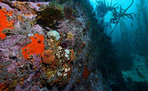 DivingDiving in the Monterey Bay National Marine Sanctuary