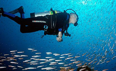 Diver encircled by school of fishDiver encircled by school of fish in Flower Garden Banks National Marine Sanctuary