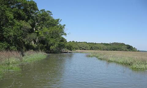 Preview photo of Ace Basin National Estuarine Research Reserve