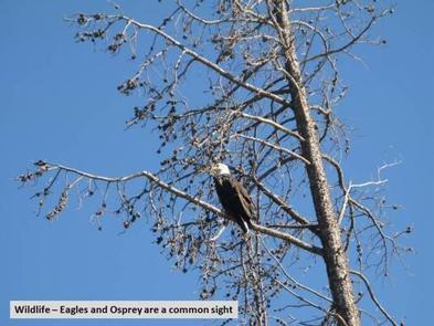 Big Creek Lakes Wildlife Eagle Photo 1