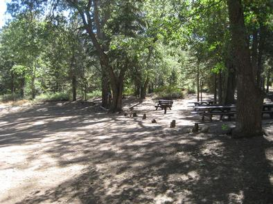 Shaded area at Buttercup Group Camp