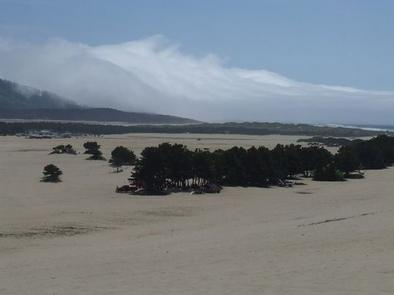 Wind Swept Trees On Flat Beach With Fog Bank Over Coastal Hills In Background