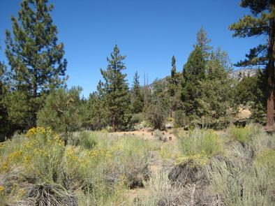 Scenic View from Heart Bar Equestrian Campground
