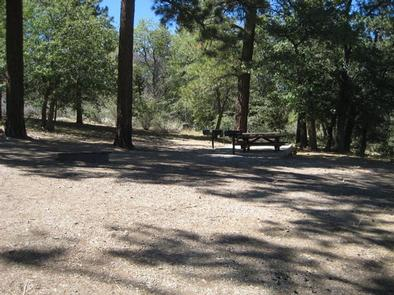 Naturally Shaded Area at Green Spot Equestrian Group Camp