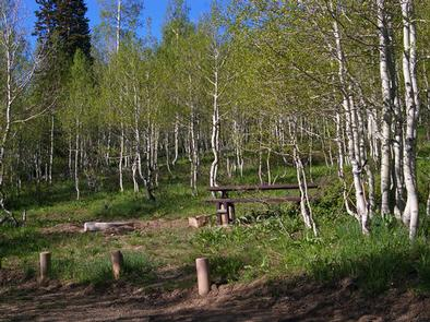 Gooseberry Group Campground SiteGooseberry Group Campground