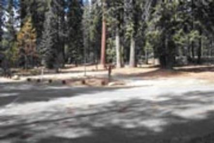 Preview photo of Stony Creek Sequoia