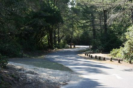 Single lane flat asphalt road winding through conifer trees and shrubbery.EEL CREEK CAMPGROUND