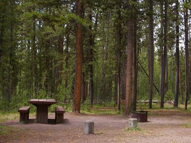 Pine trees surrounding campsite, picnic table & fire ringWooded campsite