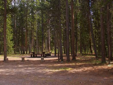 Campsite surrounded by pine trees,  picnic table & fire ringWooded campsite