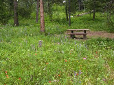 Campsite with Pine trees, picnic table & fire ringCampsite