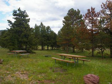 Picnic tables in a grassy area with a few pines in the area.Browne Lake Campground