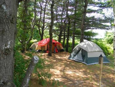 Sleeping under the pinesBeautiful, spacious campsite
