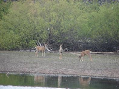 Preview photo of Butte Lake Stock Corral