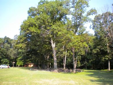 Photo of Picnic Area A, showing tables in the trees and restroom in the backgroundPicnic Area A