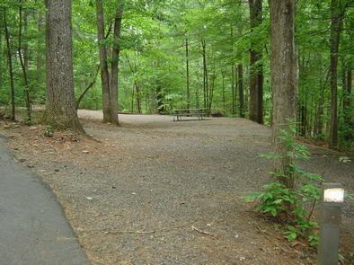Horseshoe Point campsite with picnic table, surrounded by forest. Forested campsite at Horseshoe Point.