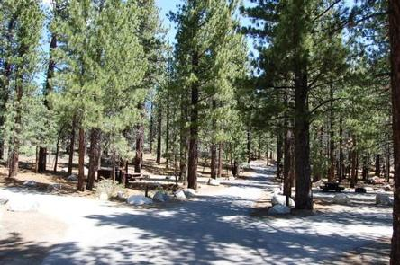 Preview photo of New Shady Rest Campground