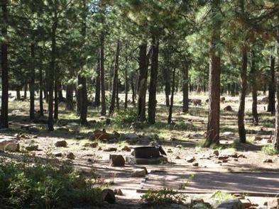 CROOK CAMPGROUND OverviewCrook Campground overview