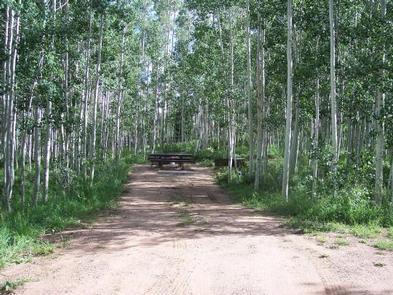 Campsite surrounded by aspen treesCampsite 9