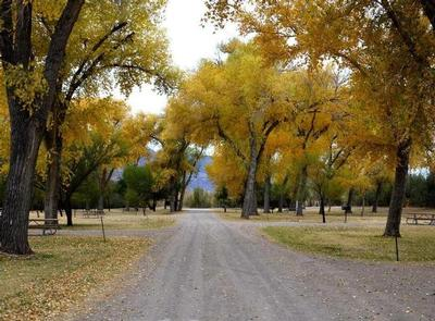 Tree-lined road through the campground, with yellowing treesTree-lined road through the campground