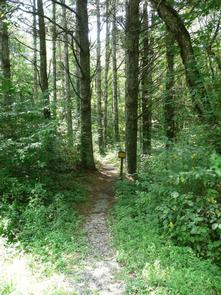 STONY FORK CABINNearby Trail