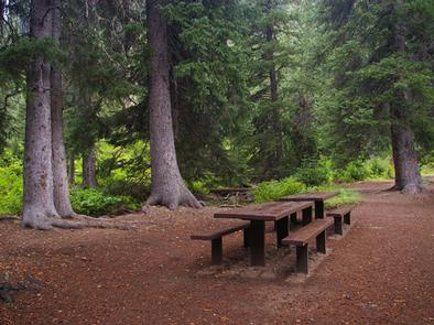 COTTONWOOD GROUP CAMPSITEtent site with picnic tables