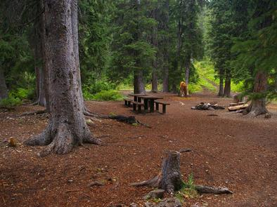 COTTONWOOD GROUP CAMPSITE