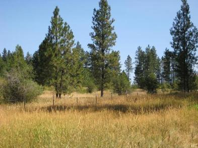Preview photo of Pattee Canyon Picnic Area